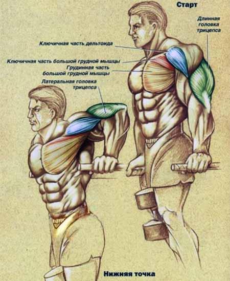как похудеть эктоморфу мужчине
